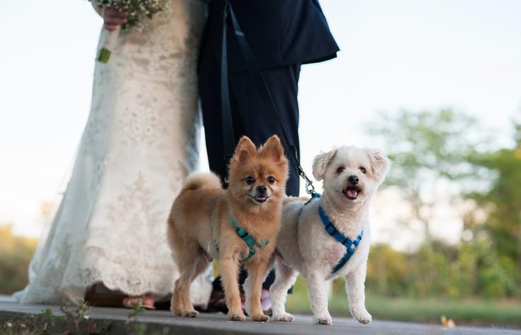 mhaynesphoto_weddingphotography_h11